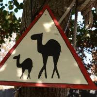REPORTEUF - Terre Blanque accueille Lickbus en plein Sahara